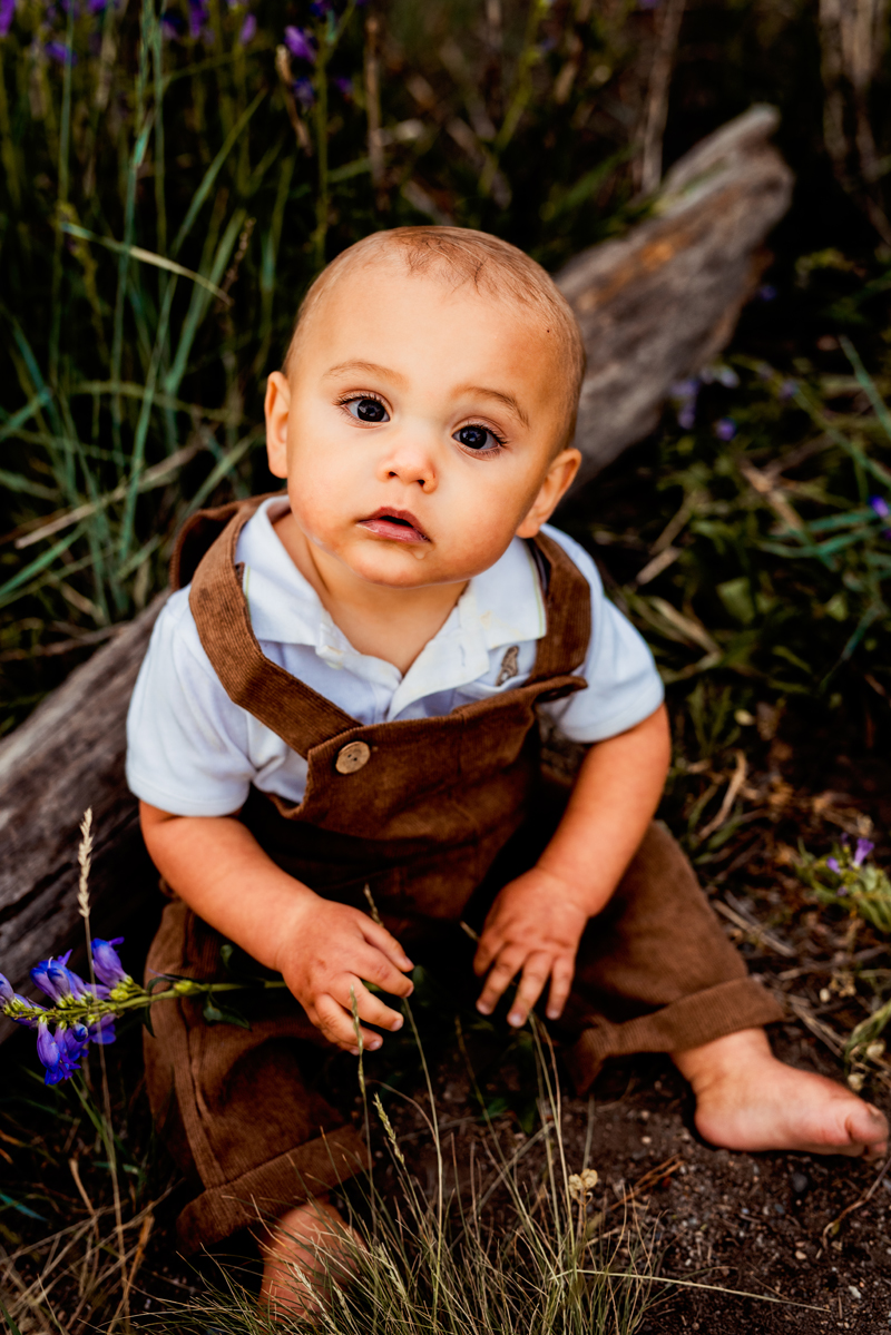 Family photography, baby boy in overalls sits in grass near log, holding a purple flower